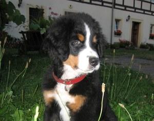 Wanderung mit Hund  / Bruno vorm Ausflug