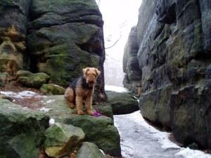 Wanderung mit Hund Labyrinth