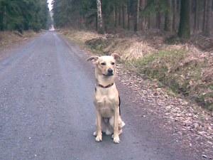 Wanderung mit Hund Zschirnsteine